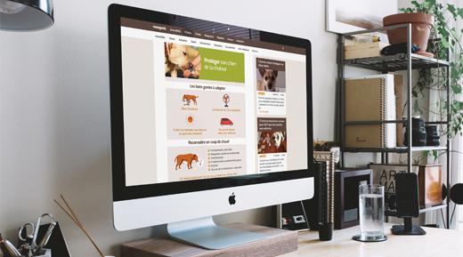 Illustration Infographies et illustrations de contenu